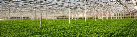 Greenhouse screens keep temperatures more stable throughout the day and night.