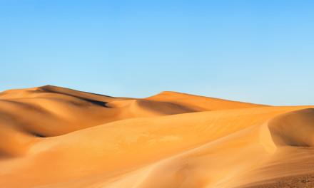 A blooming desert