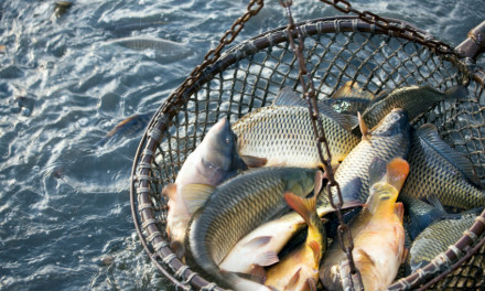 The future of fish farming