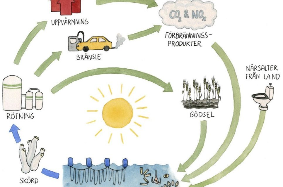 Renewable energy from cleaner seas