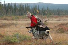 Moose Hunting the Natural Way