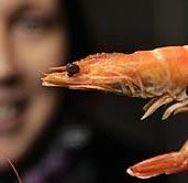 Sustainable shrimp farming