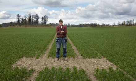 Unique method of wheat cultivation cuts environmental impact