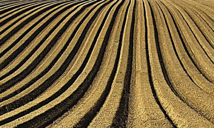 Nutrient recycling turns a problem into profit